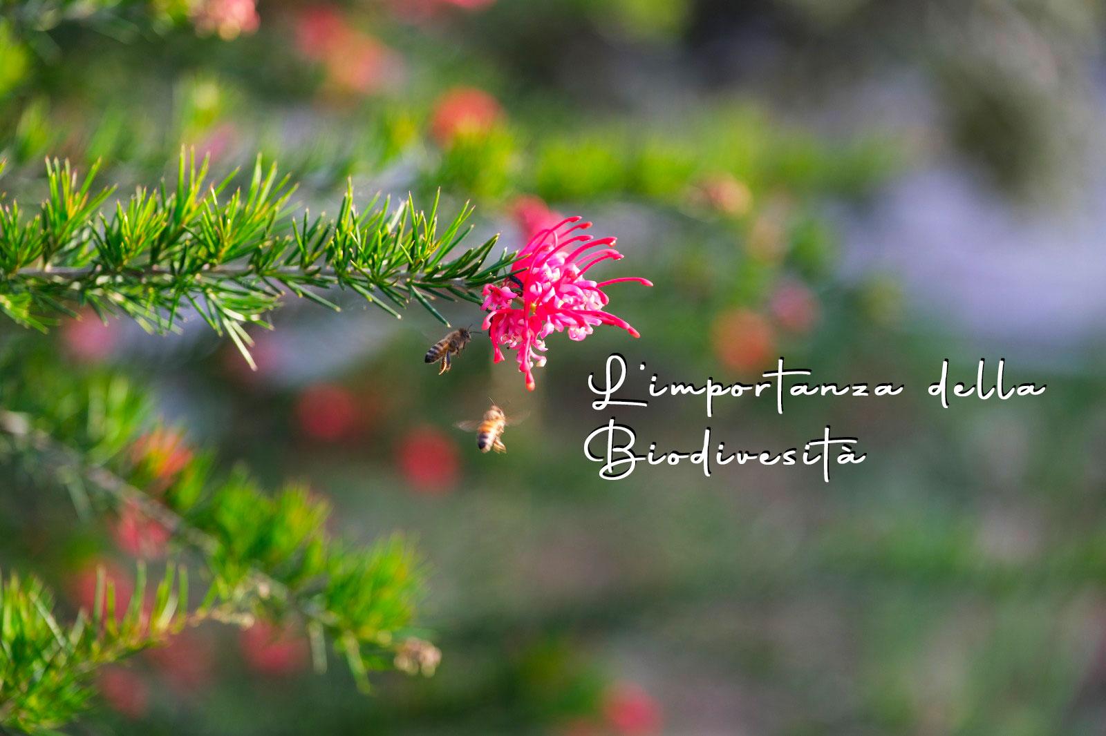 l-importanza-della-biodiversità-api-in-volo